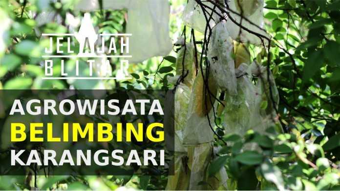 Travel Blog Jelajah Blitar Page 6 Agrowisata Belimbing Karangsari Kab