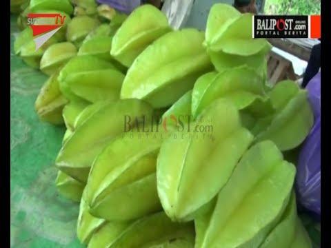 Wisata Petik Belimbing Bojonegoro Youtube Agrowisata Karangsari Kab Blitar