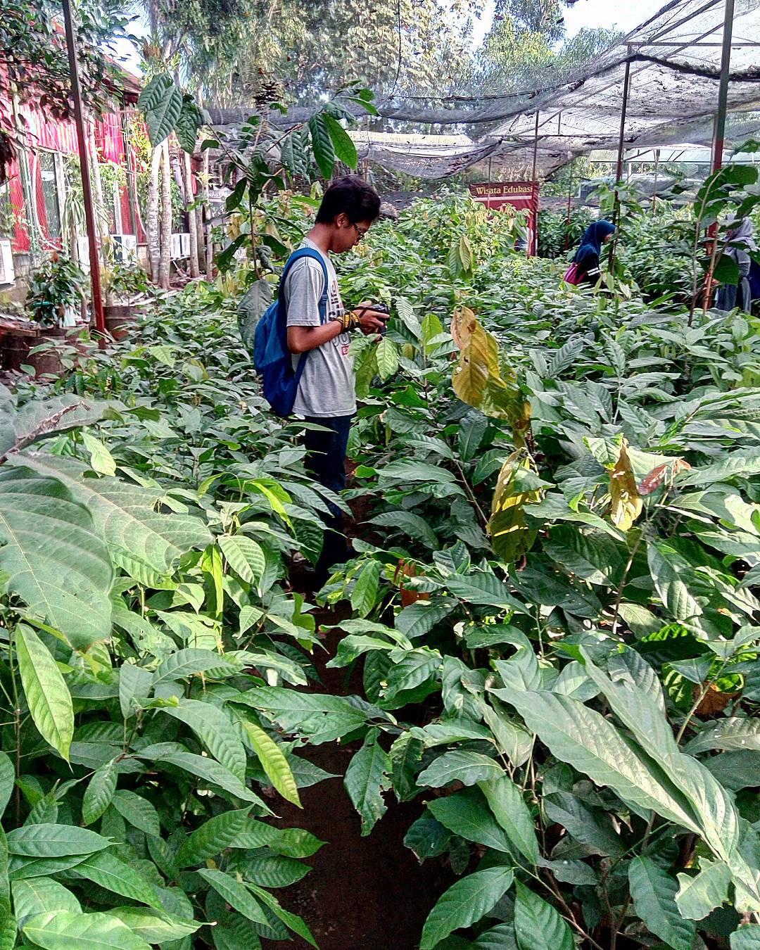 Kampung Coklat Blitar Destinasi Keluarga Libur Panjang Kebun Sumber Foto