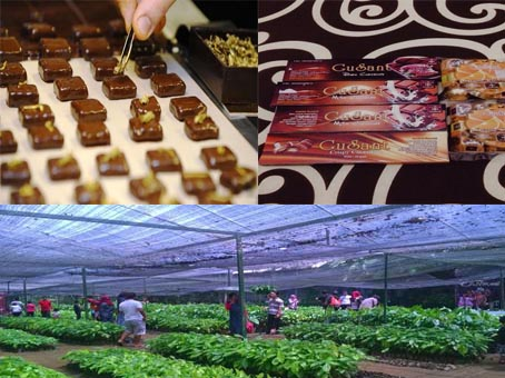Wisata Kampung Coklat Pesona Pariwisata Seni Budaya Jendela Indonesia Blitar