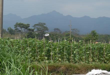 Desa Modangan Gelar Potensi Budaya Kampung Melon Wisata Kab Blitar