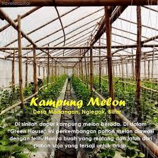 Kampung Melon Blitar Fauzi Explore Ia Hidup Sederhana Mencapai Kemuliaan