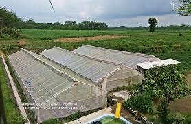 Kampung Melon Blitar Fauzi Explore Sekadar Informasi Buah Dihasilkan Langsung