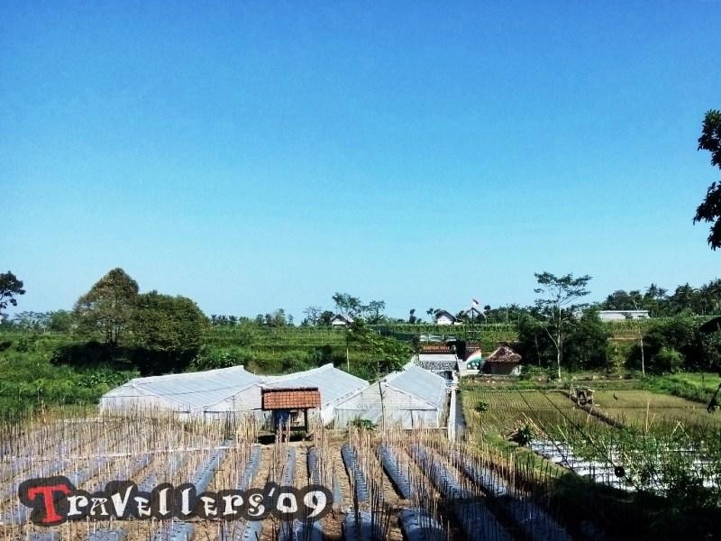 Kampung Melon Blitar Travellers Desa Wisata Modangan Kab