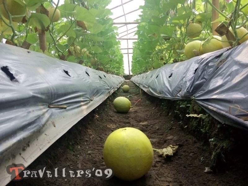 Kampung Melon Blitar Travellers Kampoeng Salah Satu Desa Wisata Modangan