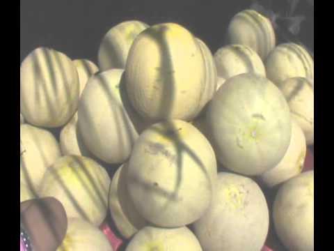 Mantap Lounching Kampung Melon Blitar Youtube Desa Wisata Modangan Kab