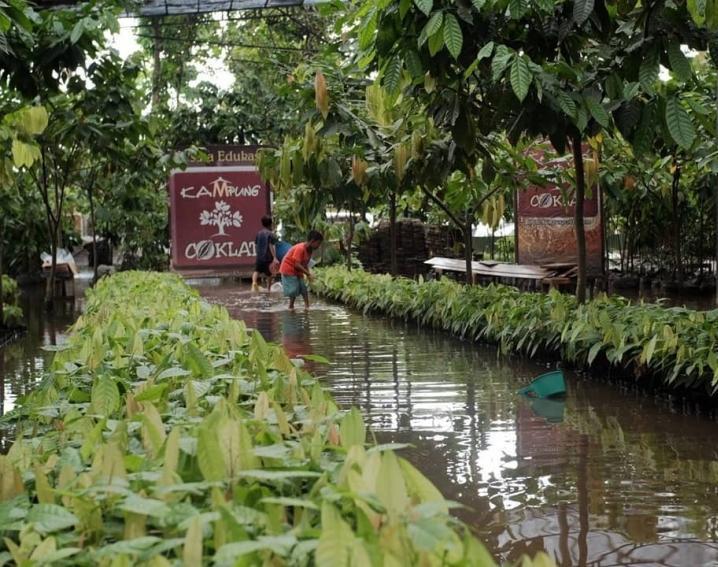 Kampung Coklat Blitar Kebun Ikan Kab