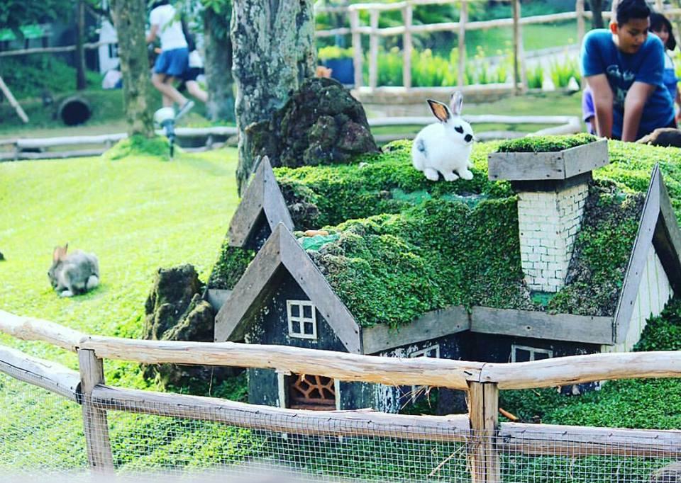Harga Tiket Masuk Lokasi Rabbit Park Blitar Spot Wisata Terbaru