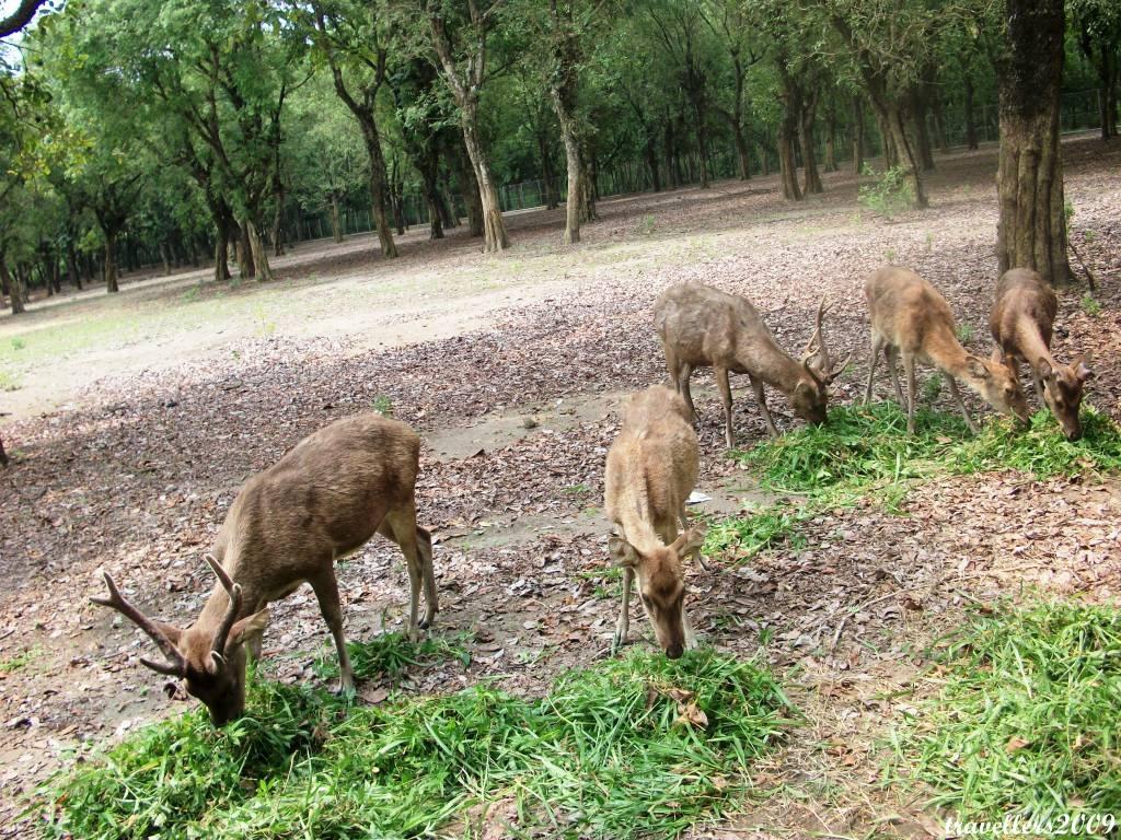 Eksotika Kabupaten Blitar Penangkaran Rusa Hutan Maliran Aikan Memposting Wisata