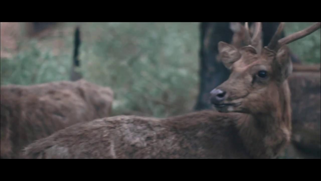 Kawasan Hutan Maliran Blitar Youtube Penangkaran Rusa Kab
