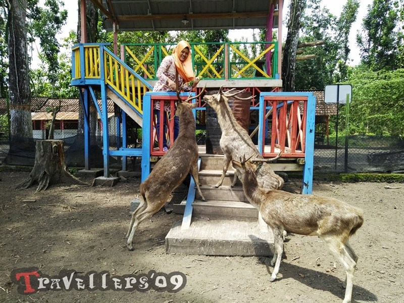 Maliran Deer Feeding Penangkaran Rusa Blitar Travellers Berinteraksi Kab