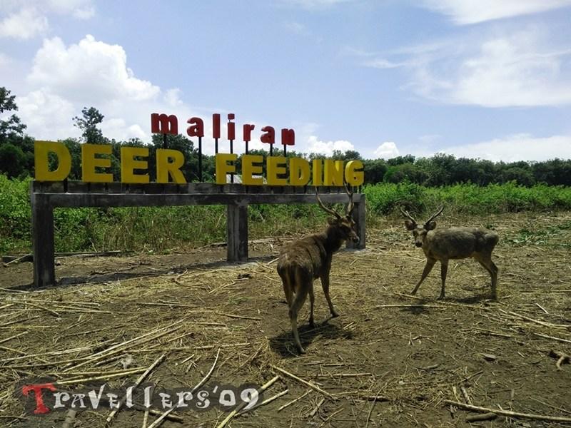 Maliran Deer Feeding Penangkaran Rusa Blitar Travellers Kab