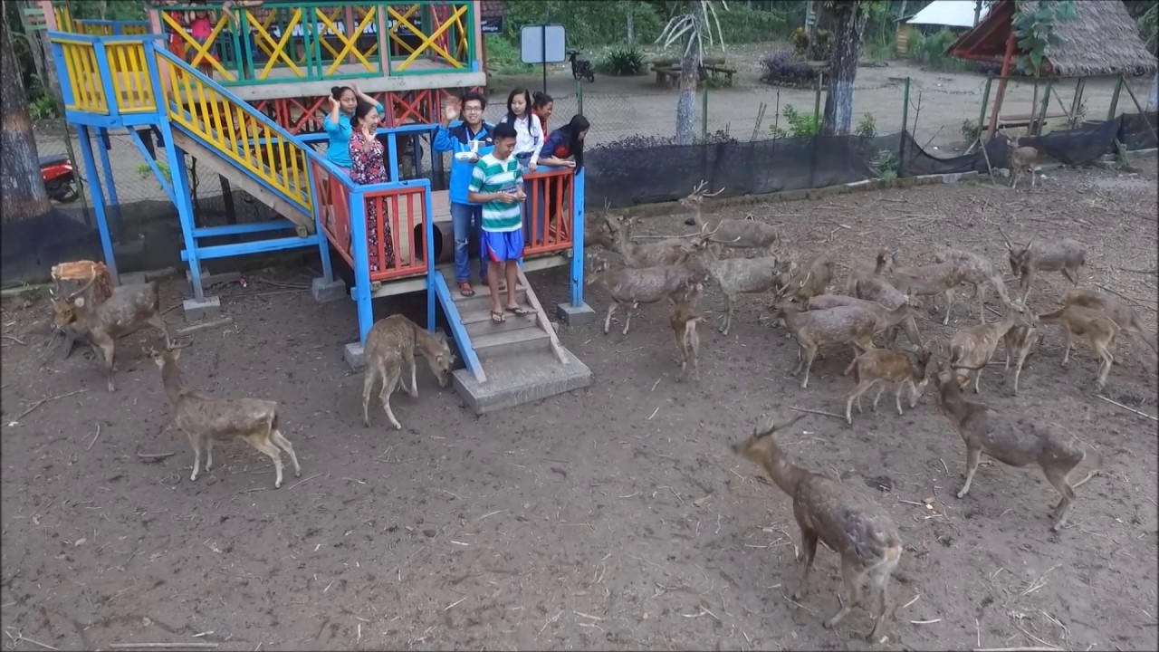 Maliran Deer Feeding Wisata Keluarga Blitar Jawa Timur Penangkaran Rusa