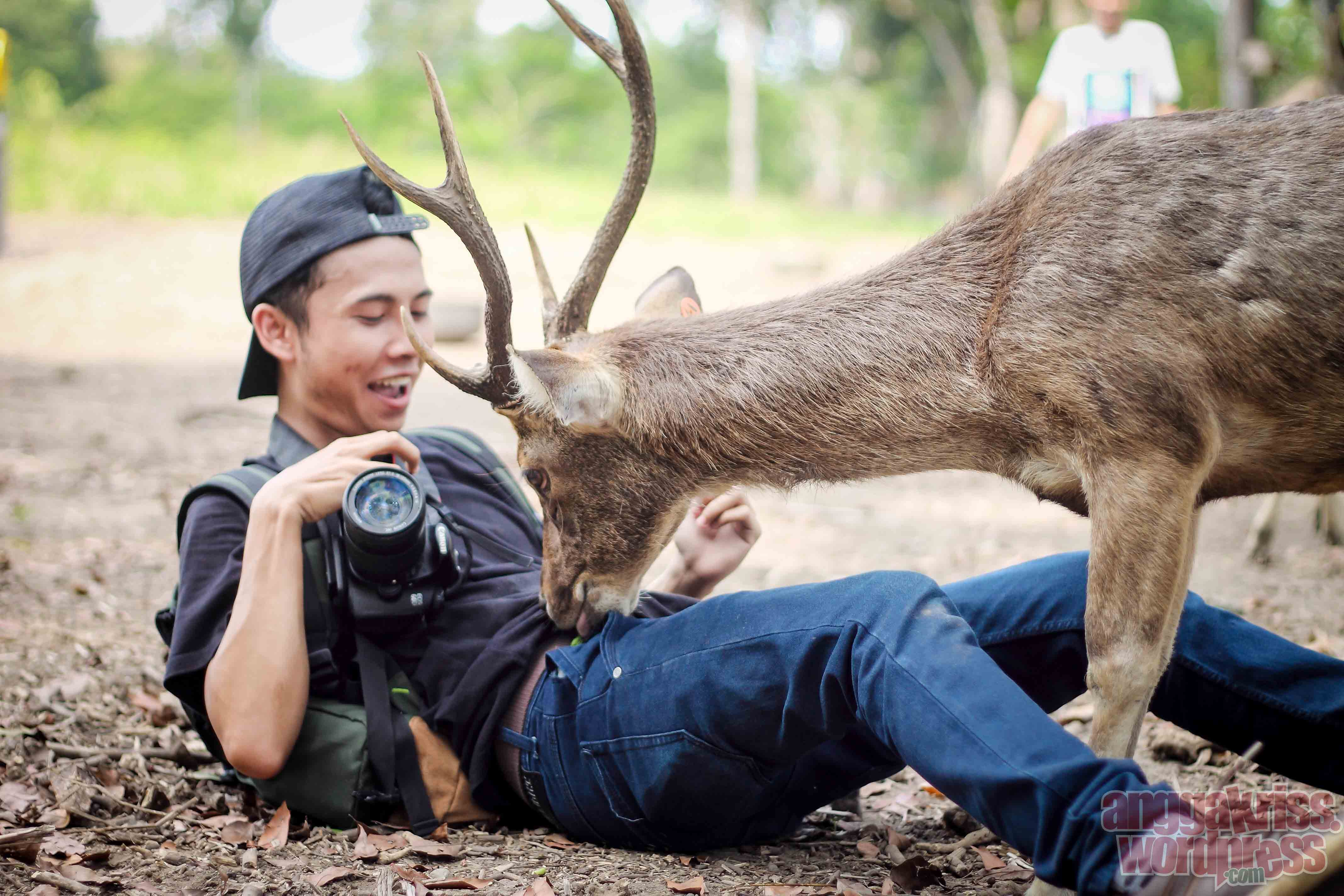 Memanjakan Rusa Maliran Deer Feeding Blitar Anggakris Blog Buka Baju