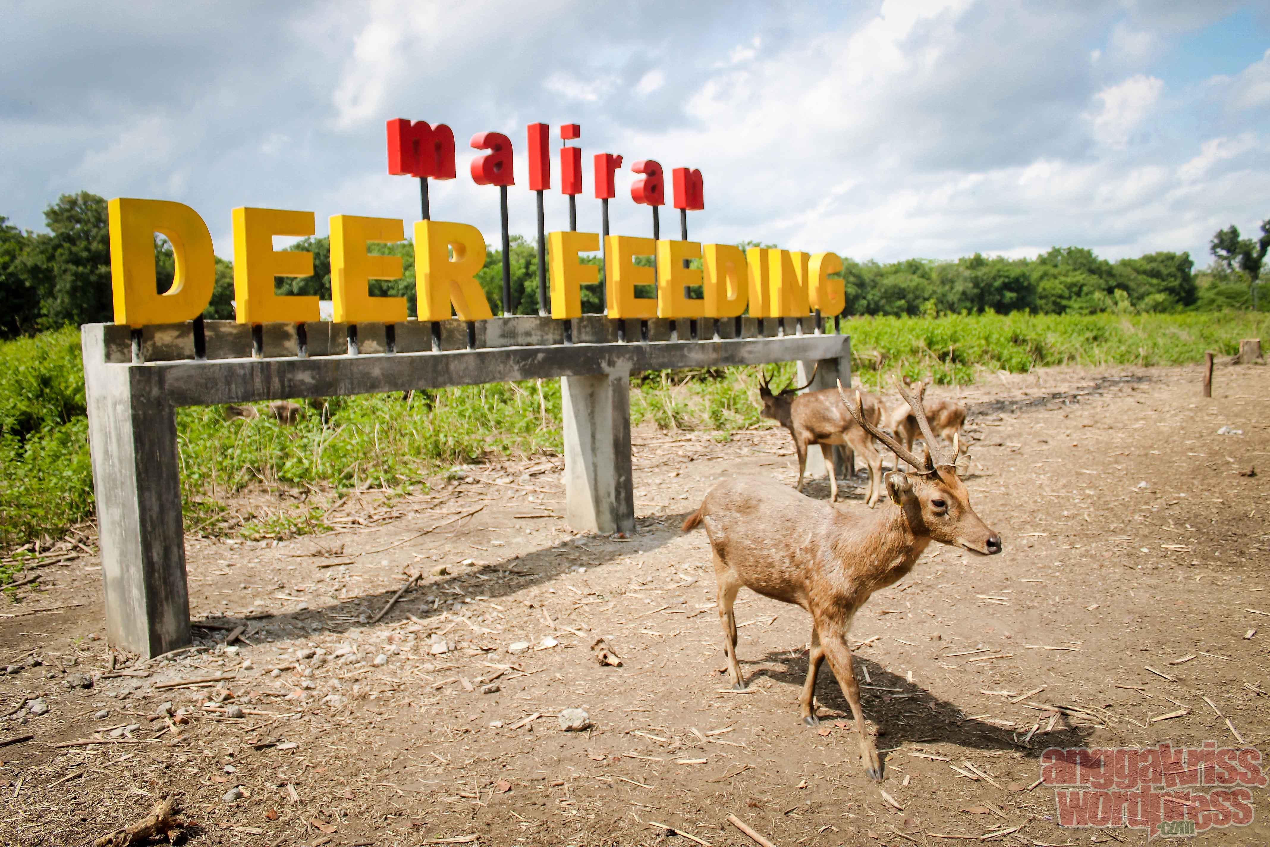Memanjakan Rusa Maliran Deer Feeding Blitar Anggakris Blog Setelah Menit