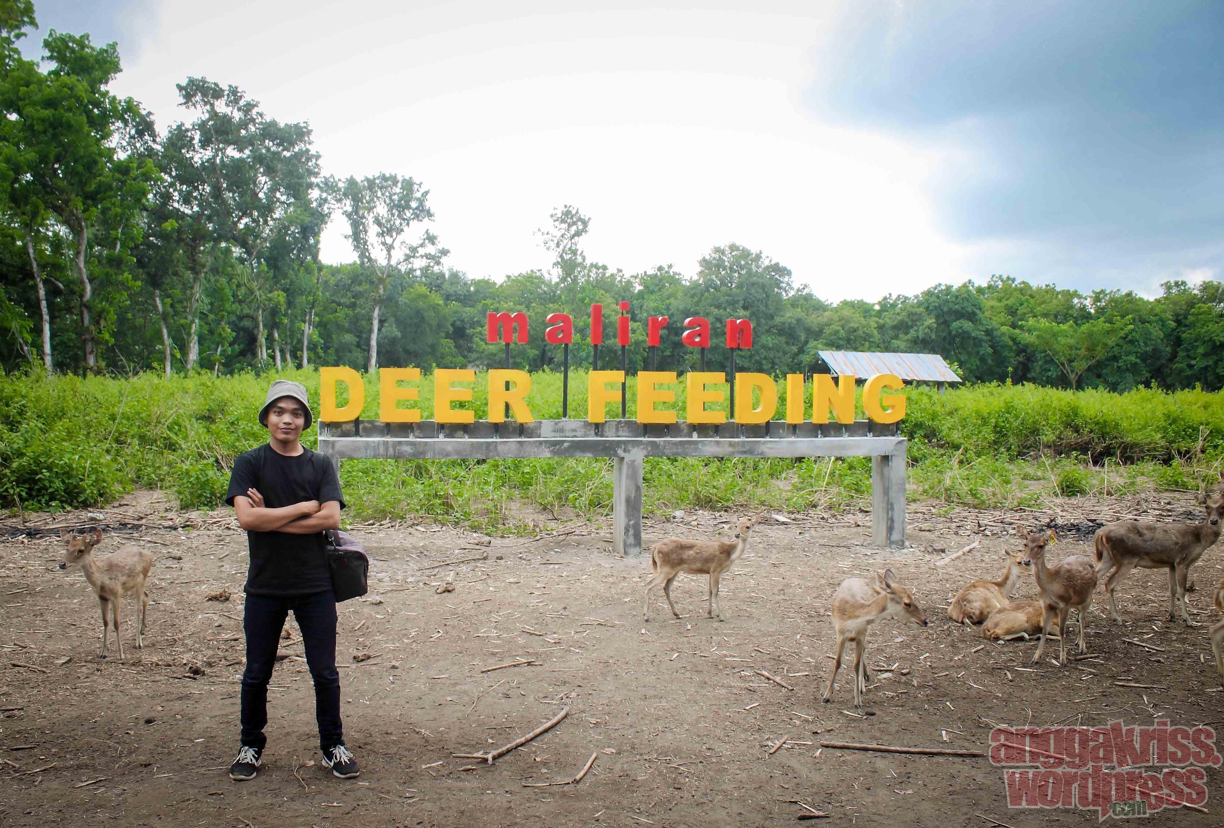 Memanjakan Rusa Maliran Deer Feeding Blitar Anggakris Blog Tiket Masuknya