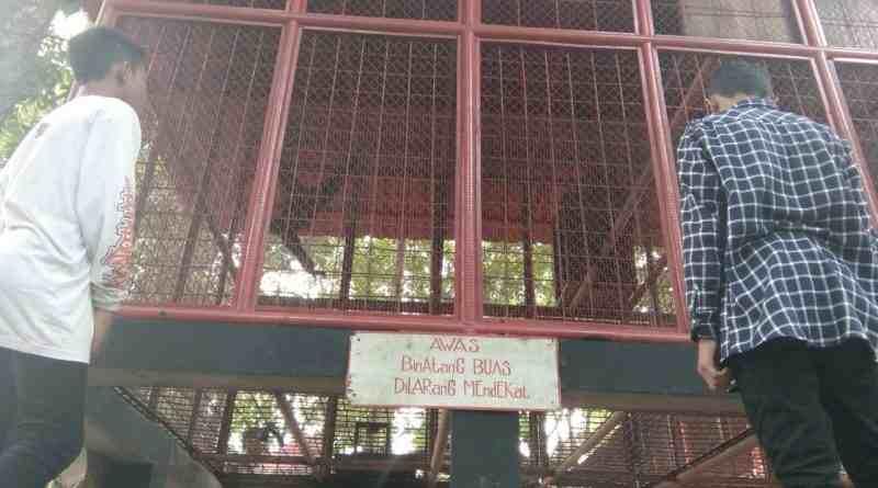 Polisi Selidiki Penyebab Kasus Bocah Diterkam Monyet Kebon Rojo Kota