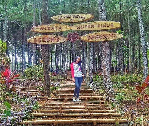 Rute Lokasi Hutan Pinus Gogoniti Blitar Gembok Cintanya Lho Zegra
