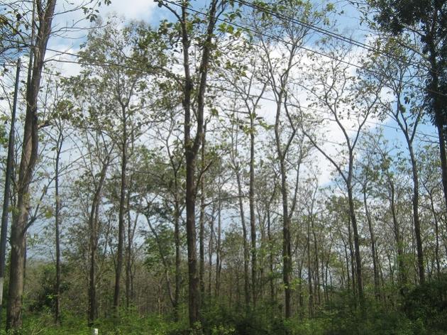 Agrowisata Temanjang Gudangnya Pohon Jati Jitunews Istimewa Kab Blora