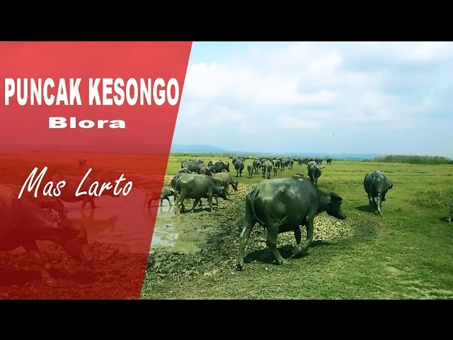 Jalan Puncak Kesongo Blora Travelerbase Traveling Tips Agrowisata Temanjang Kab