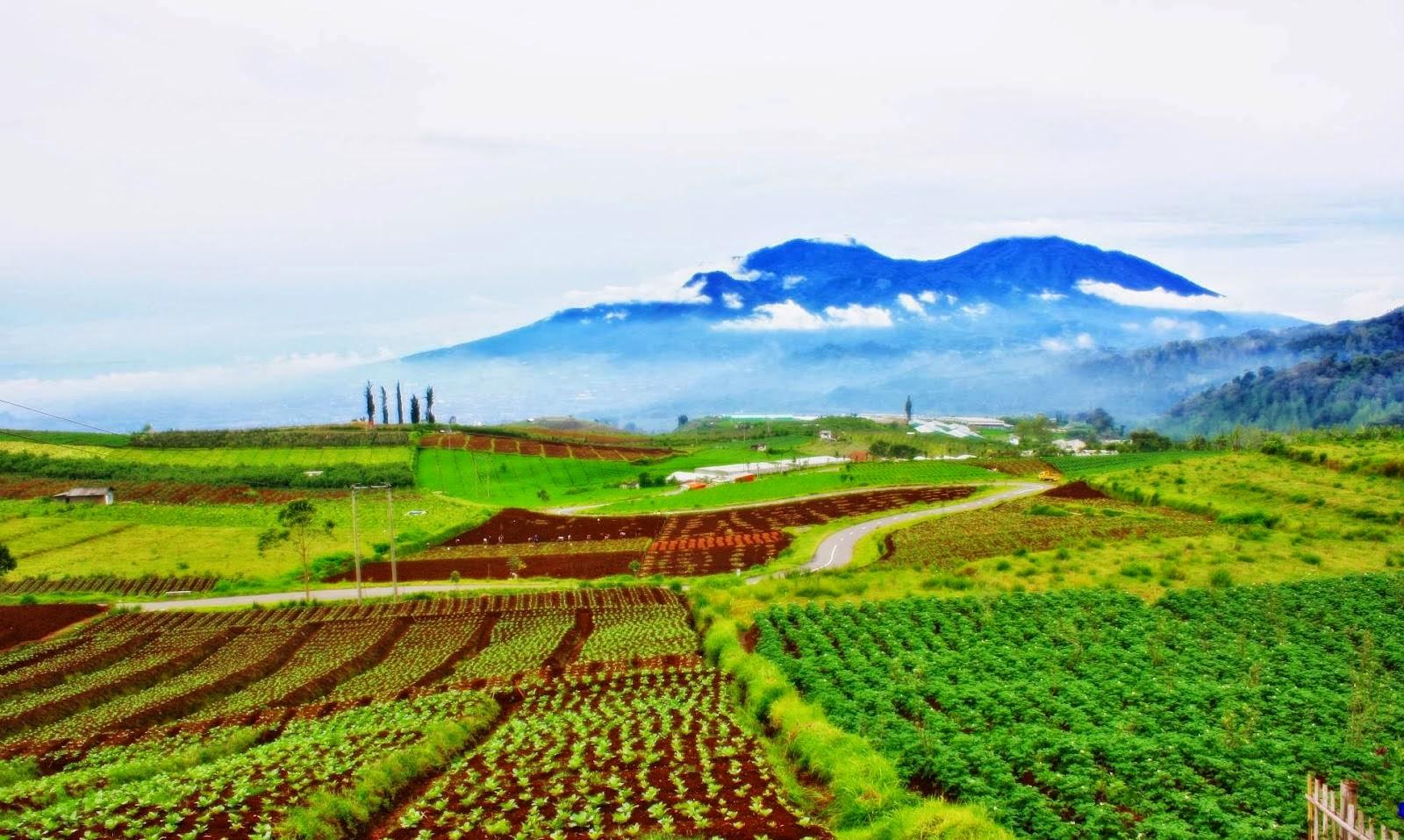 Pemandian Sayuran Blora Agrowisata Temanjang Kab