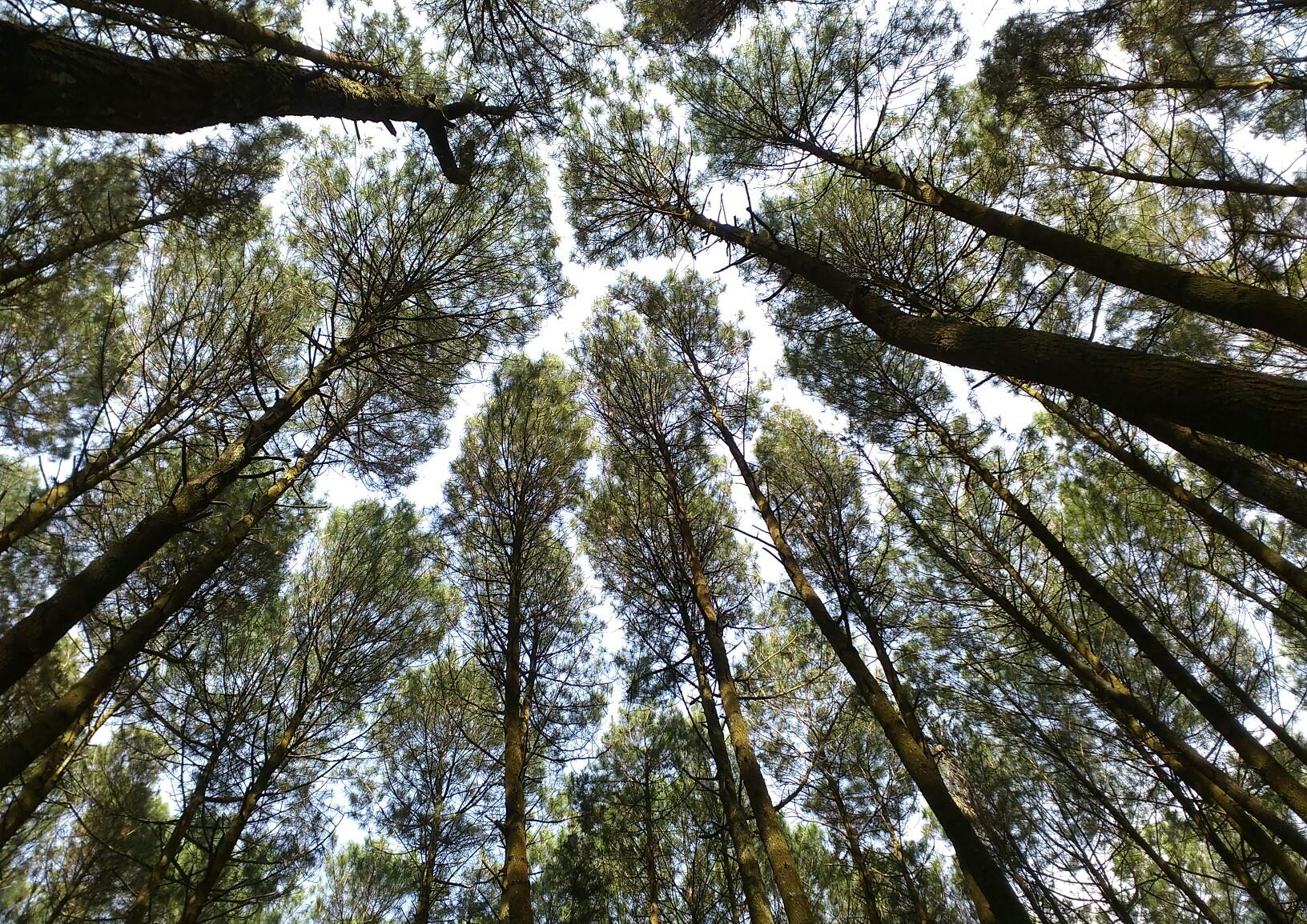 Tempat Wisata Alam Agrowisata Temanjang Blora Jateng Sejarah Kab