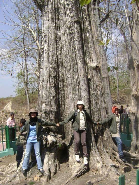 Wisata Kisah Monumen Jati Alam Gubug Payung Denok Salah Satu