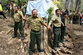 Inilah Pohon Jati Termahal Dunia Pks Cibitung Petak 1 092