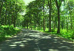 Jati Wikipedia Bahasa Indonesia Ensiklopedia Bebas Daerah Sebaran Hutan Jawa