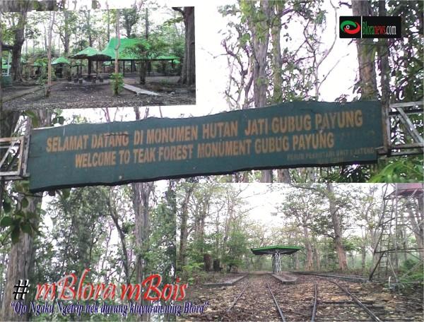 Kluyuran Ning Blora Bloranews Musium Jati Nasional Monumen Hutan Alam