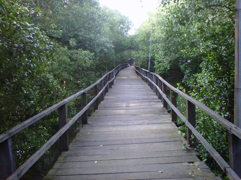 March 2017 Tips Wisata Hutan Mangrove Terletak Desa Bedono Kecamatan