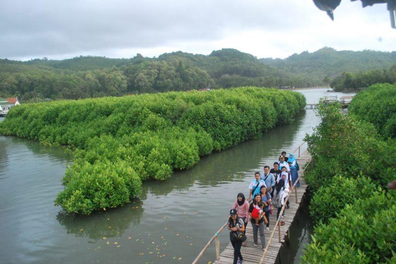 March 2017 Tips Wisata Kawasan Hutan Mangrove Letaknya Tak Jauh