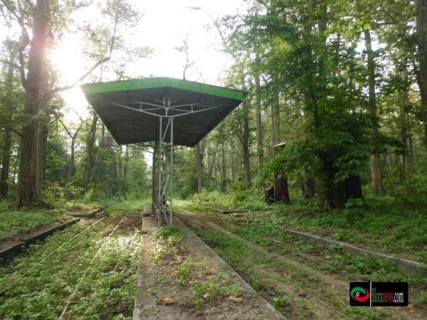 Monumen Jati Alam Kereta Tua Membelah Hutan Bloranews Blora Kab