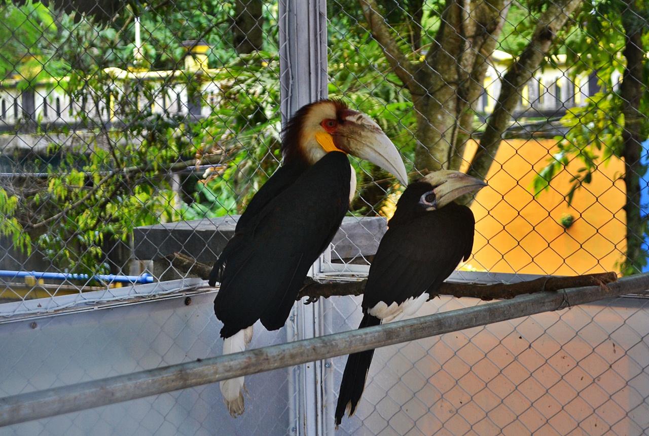 Aneka Burung Cantik Hiasi Taman Tirtonadi Kota Blora Infoblora Rangkong