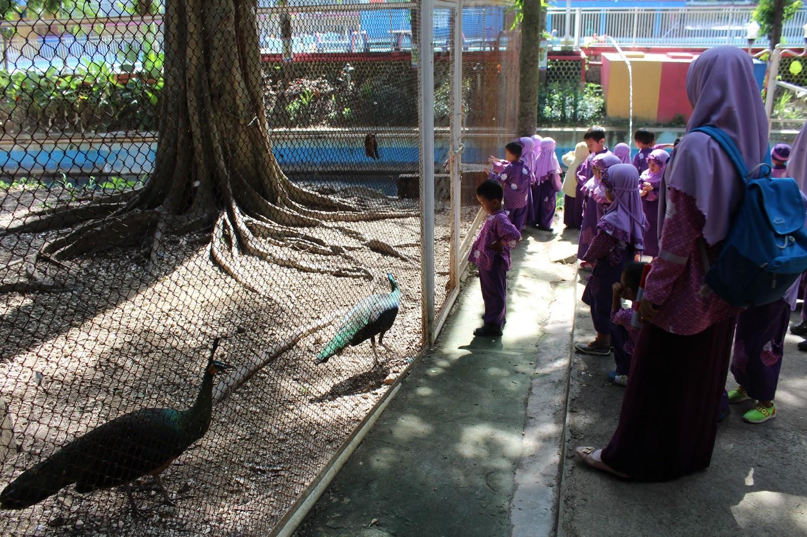 Asiknya Mengenal Aneka Burung Langka Taman Tirtonadi Blora Anak Tk