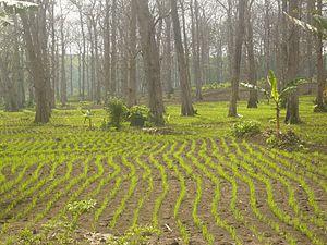 Kabupaten Blora Wikipedia Bahasa Indonesia Ensiklopedia Bebas Pemanfaatan Lahan Hutan