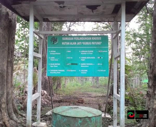 Monumen Jati Alam Kereta Tua Membelah Hutan Bloranews Gubug Payung
