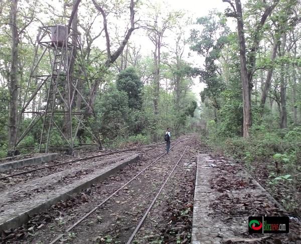Monumen Jati Alam Kereta Tua Membelah Hutan Bloranews Loko Tour