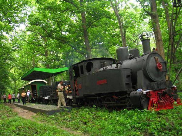 Naik Lokomotif Tua Menikmati Keindahan Hutan Jati Blora Vebma Kereta