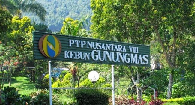 7 Tempat Wisata Menarik Puncak Bogor Wisata88 Agrowisata Gunung Mas