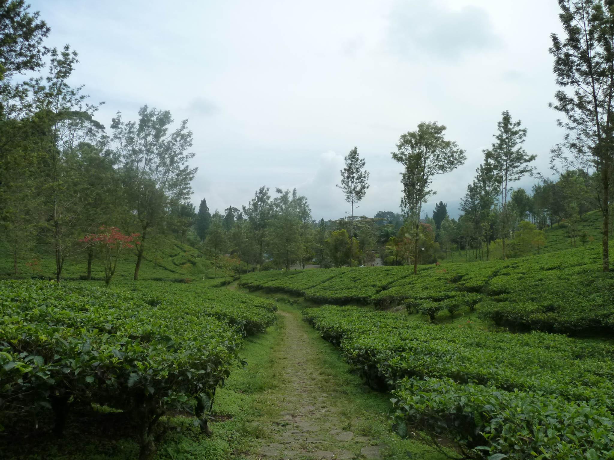 7 Wisata Bogor Menarik Dikunjungi Klikhotel Berkuda Gunung Mas Tea