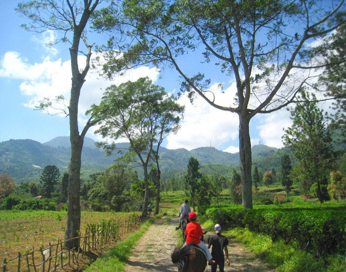 Agro Wisata Gunung Mas Kids Holiday Spots Liburan Anak Kab