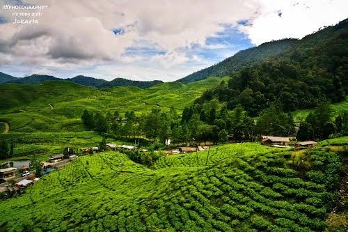 Agrowisata Gunung Mas Bogor Gambar Agro Kab