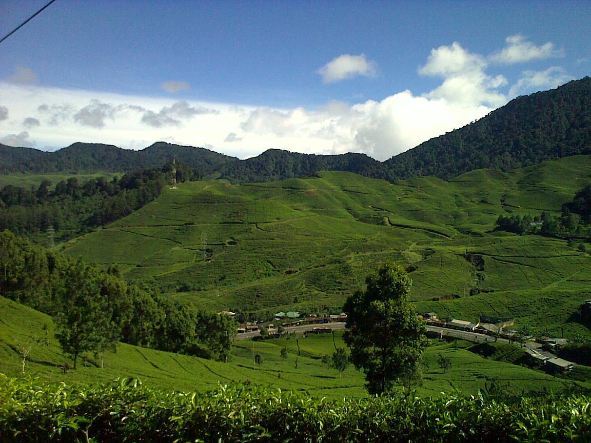 Agrowisata Gunung Mas Sejuk Liburan Perkebunan Teh Hotel Indonesia Hdg