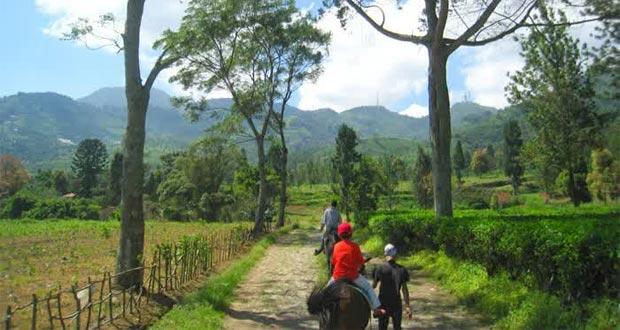 Cain Lemontri 7 Tempat Wisata Seru Puncak Bogor Agro Gunung