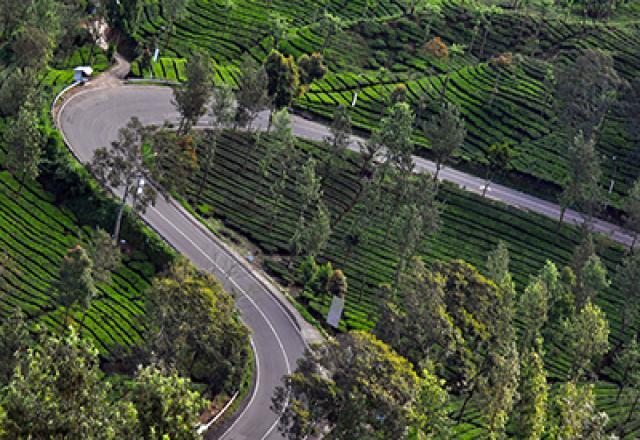 Daftar Acara Malam Kebun Teh Puncak Bogordaily Net Bogor Daily