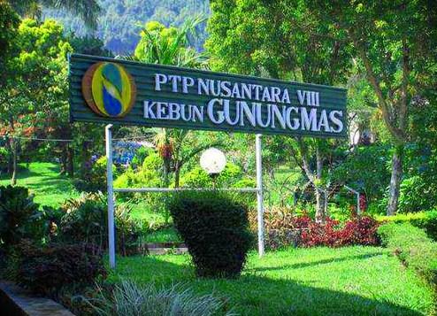 Destinasi Obyek Wisata Gunung Mas Puncak Cianjur Jawa Barat Agro