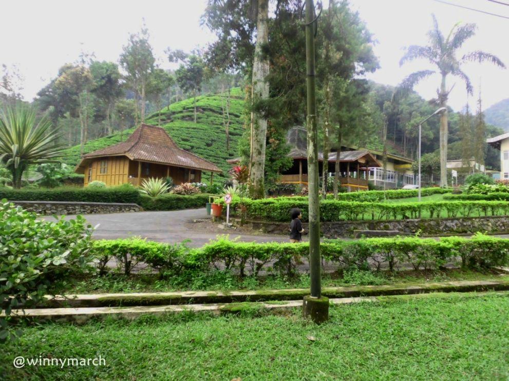 Destinasi Tempat Wisata Puncak Agrowisata Gunung Mas Bogor Agro Kab