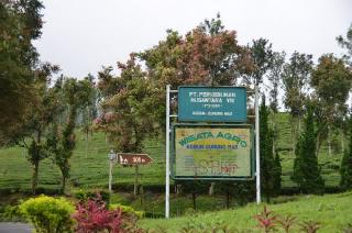Evi Safira Agro Gunung Mas Puncak Wisata Favorit Bagi Keluarga
