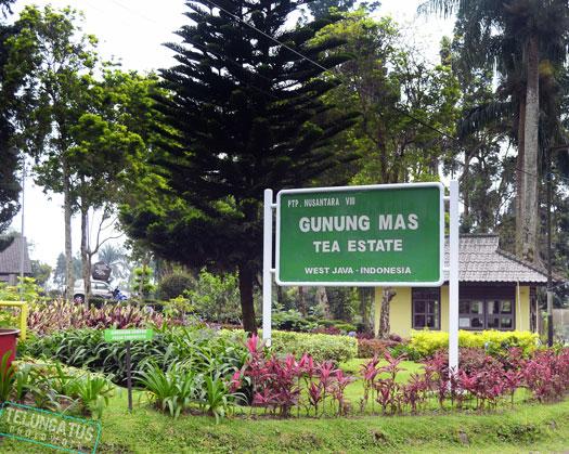 Green Carpet Agro Gunung Mas Bogor Pinterest Tourism Kab
